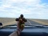 Lolipop hilft die Zeit zu vertreiben beim Autofahren