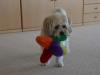 Susi will immer spielen