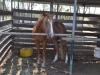 das war das wiehernde Pferd