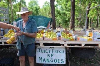 frische Mangos zu verkaufen