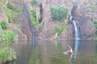 Wangi Falls und das Krokodil
