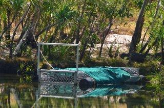 Der Pool mit Krokodil-Falle