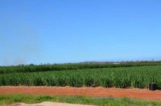 Zuckerrohr Felder