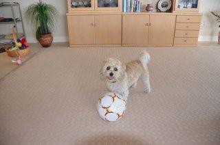 Susi und der Ball