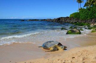riesen Schildkröte