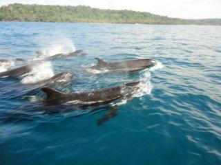 Die Delphinen schammen neben uns auf uns ab