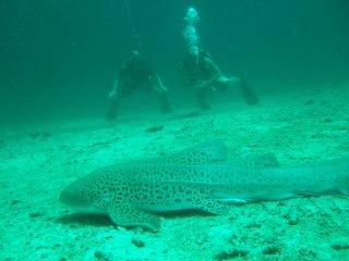Ein Leopardenhai und wir am posieren :-)