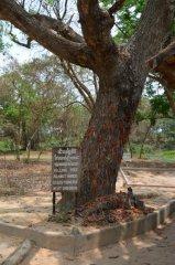Der Killing Tree! :-(