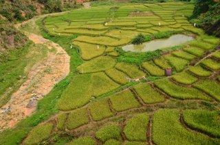 Ausblick auf die grünen Reisfelder