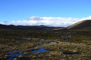 Alpaka Herde mit super Hintergrund