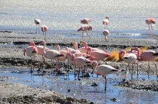 hier hatte es viele Flamingos
