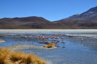 Flamingos soweit das Auge reicht