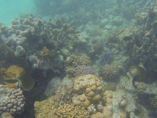 Coral Bay Unterwasser