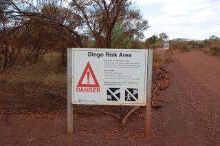 Dingo Risk Campground