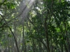 Der Cahuita National Park