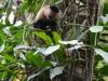 Totenkopf Affen umzingelten uns