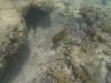 Turquoise Bay Unterwasser