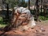 Wanderung im Flinders Ranges National Park