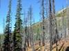 Abgebrannter Wald auf dem
