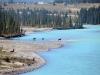 Elche beim Athabasca River