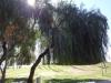 Lustiger Baum beim Central Parque