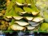 Frische Aloe Vera Blätter
