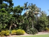 Brisbane botanical garden