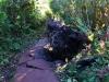 der Wanderweg zum zweiten Krater
