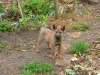 Babyhund :)