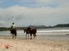 Pferdereiten am Strand