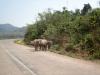 wieder Tiere auf der Strasse