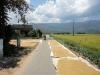 Überall wird Reis getrocknet